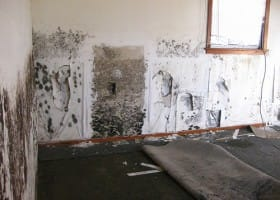 Fight Mold and Keep Homes Healthy
