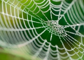 A Sticky Situation: Getting Rid of Cobwebs