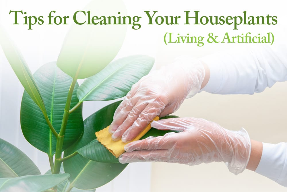 Tips for cleaning your houseplants living artificial the maids blog - Tips for dusting your home ...