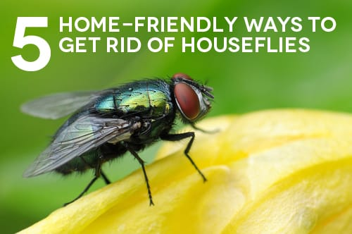 5 Home Friendly Ways To Get Rid Of Houseflies