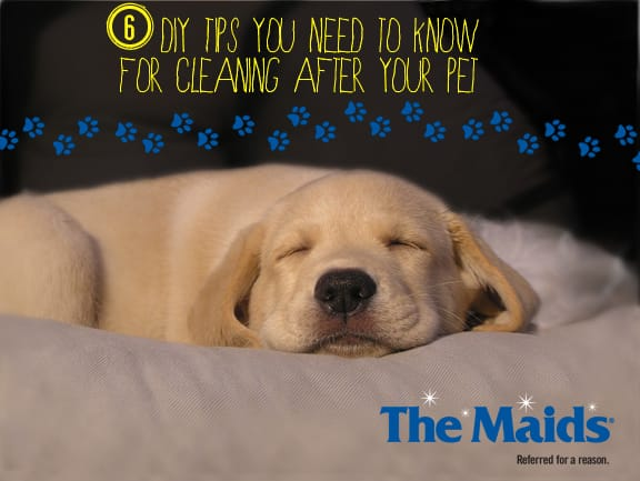 6 DIY Tips You Need to Know For Cleaning After Your Pet