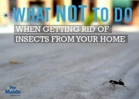 What Not To Do When Getting Rid Of Insects From Your Home
