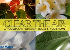 Clear The Air: A Houseplant For Every Room In Your Home