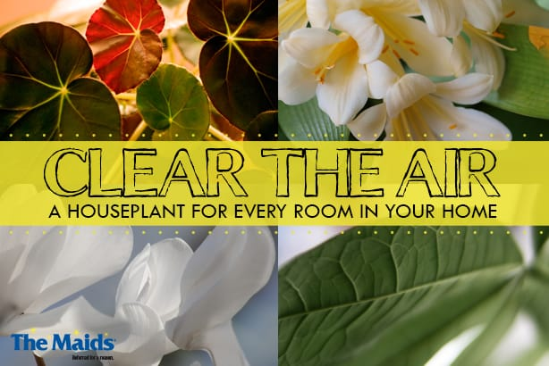 Clear The Air- A Houseplant For Every Room In Your Home