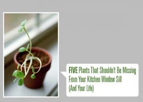 5 Plants That Shouldn't Be Missing From Your Kitchen Window Sill (and Your Life)