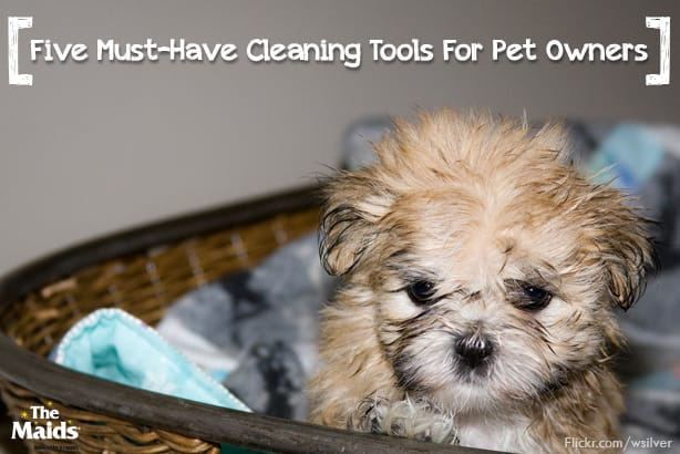 Five Must-Have Cleaning Tools For Pet Owners