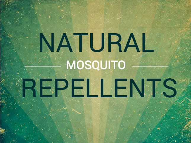 Natural Mosquito Repellents Blog