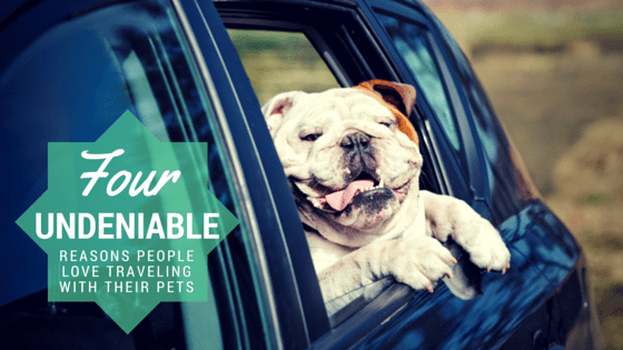 4 Undeniable Reasons People Love Traveling With Their Pets