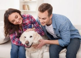 """Pet Owners and House Cleaners: A Match """"Maid"""" in Heaven"""