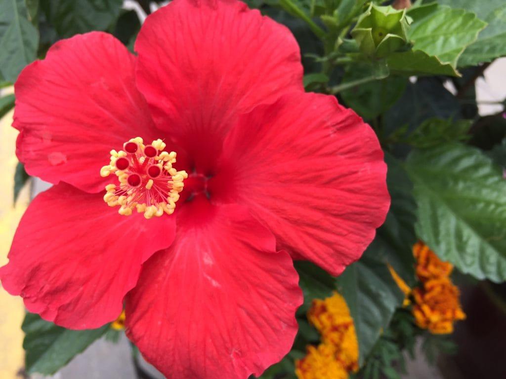 flower in container gardens