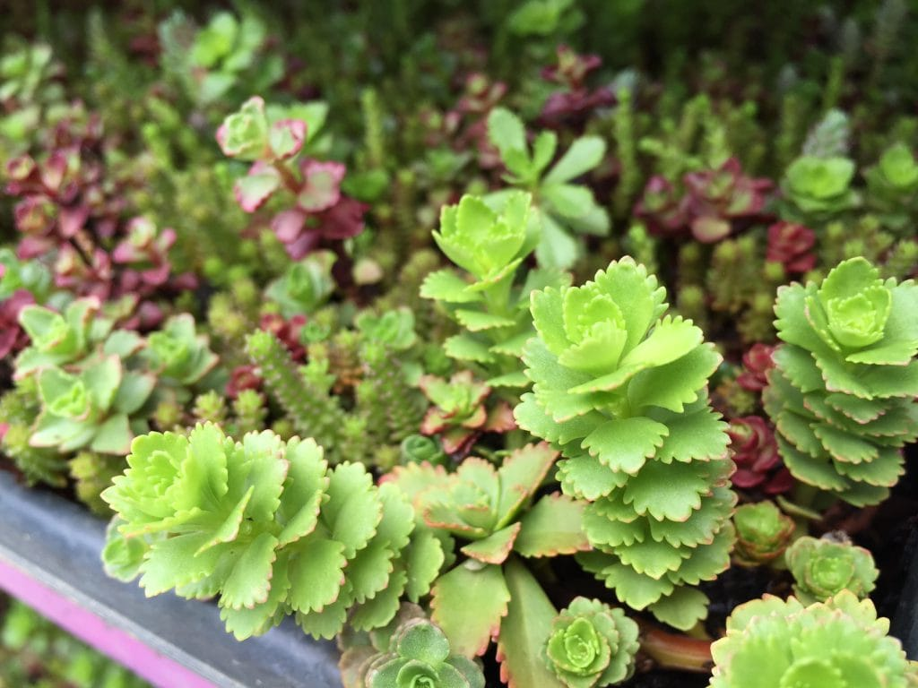 herbs container gardens