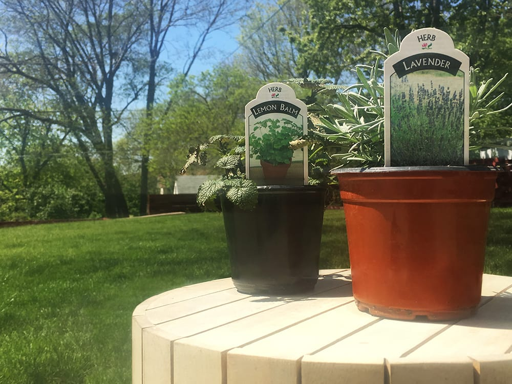 lavender and lemon container gardens