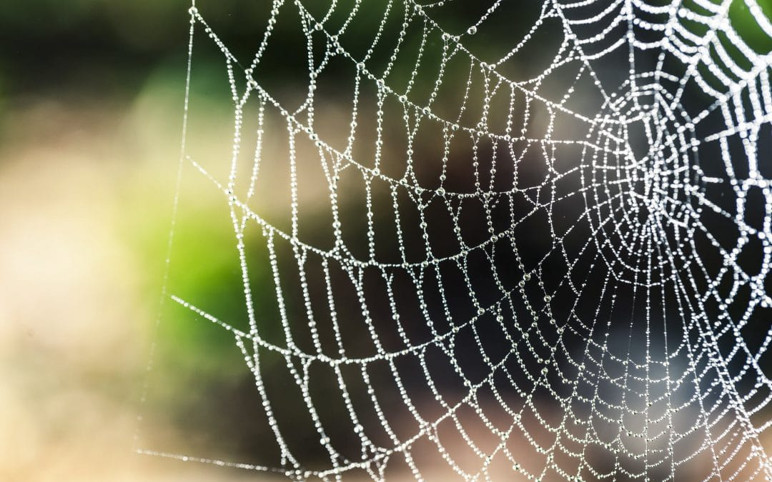 A Sticky Situation: How to Get Rid of Cobwebs