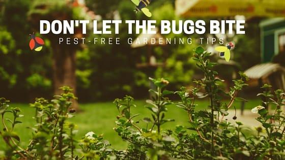 Don't Let The Bugs Bite: Pest-Free Gardening Tips