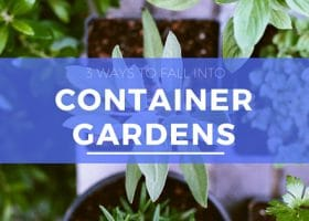 3 Ways to Fall Into Container Gardens