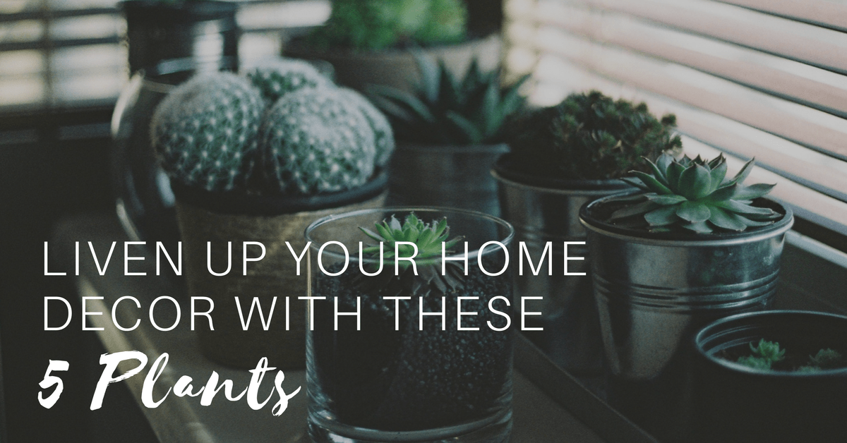 Liven Up Your Home Decor With These 5 Plants