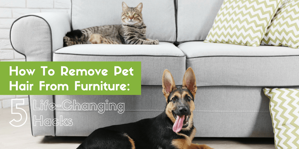 How To Remove Pet Hair From Furniture: 5 Life-Changing Hacks | The Maids Blog