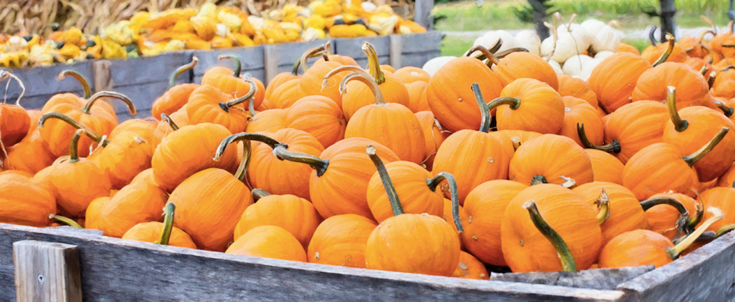Move Over Pumpkin Spice: Savor These Fall Flavors Instead