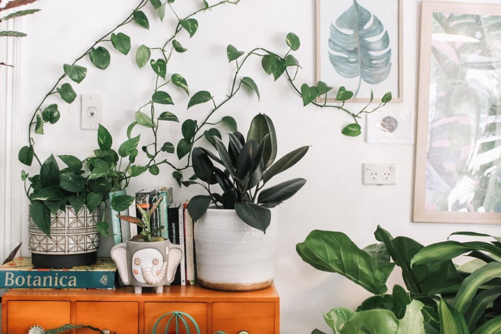 5 Air-Purifying Plants to Clean The Air in Your Home