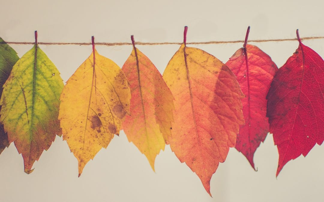 Let's Decorate for Fall: 6 DIY Ideas for Your Home and Yard