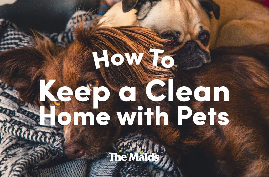 Pet Owners: How to Keep Your Home Spotless