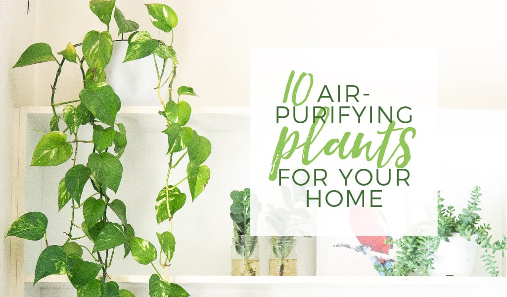 10 Air-Purifying Plants for Your Home