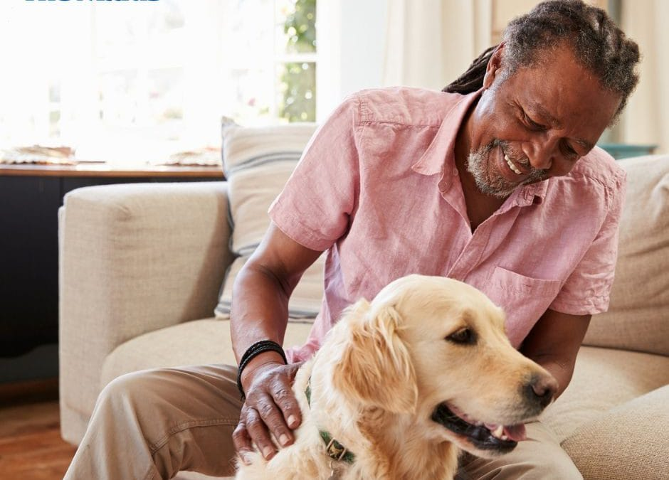 Spring Shedding: Keeping a Pet Home Clean