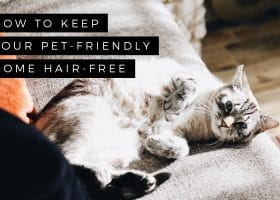 How to Keep your Pet-Friendly Home Hair-Free