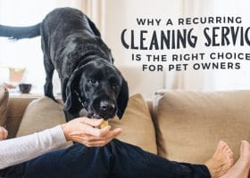 Why a Recurring Cleaning Service is the Right Choice for Pet Owners