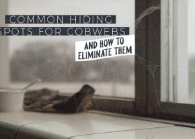 Common Hiding Spots for Cobwebs and How to Eliminate Them