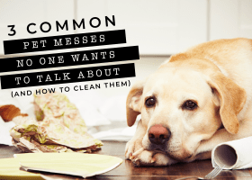 Three Common Pet Messes No One Wants To Talk About (And How to Clean Them)!