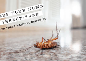 Keep Your Home Insect-Free with these Natural Remedies