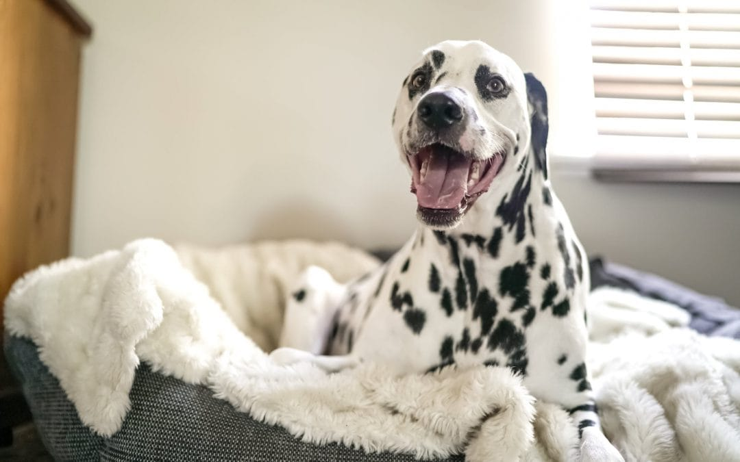 How to Keep Dog Beds Fresh and Clean