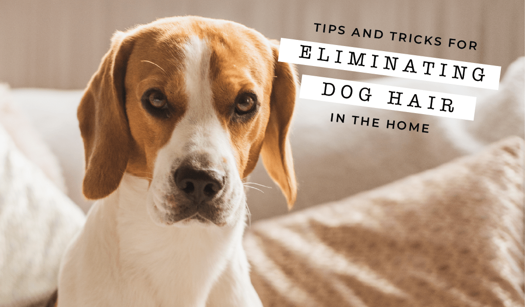 Tips and Tricks for Eliminating Dog Hair in the Home