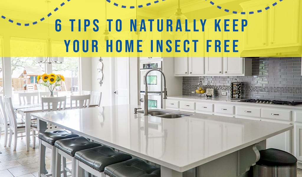 Bugged by Indoor Insects? Here are 6 Tips to Naturally Keep Your Home Insect Free